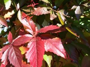 Herbstandacht für jeden Tag
